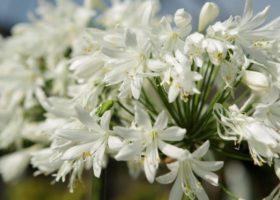 aktuelle Sommerblumen in bester Gärtnerqualität