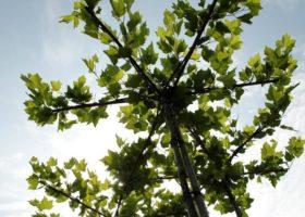 Bäume und Sträucher in super Baumschul-Qualität