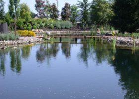 glasklares Wasser im Naturbadeteich in Münster