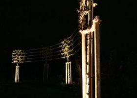 akzentuierte Gartenbeleuchtung