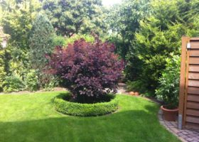 zugewachsener Garten vorher