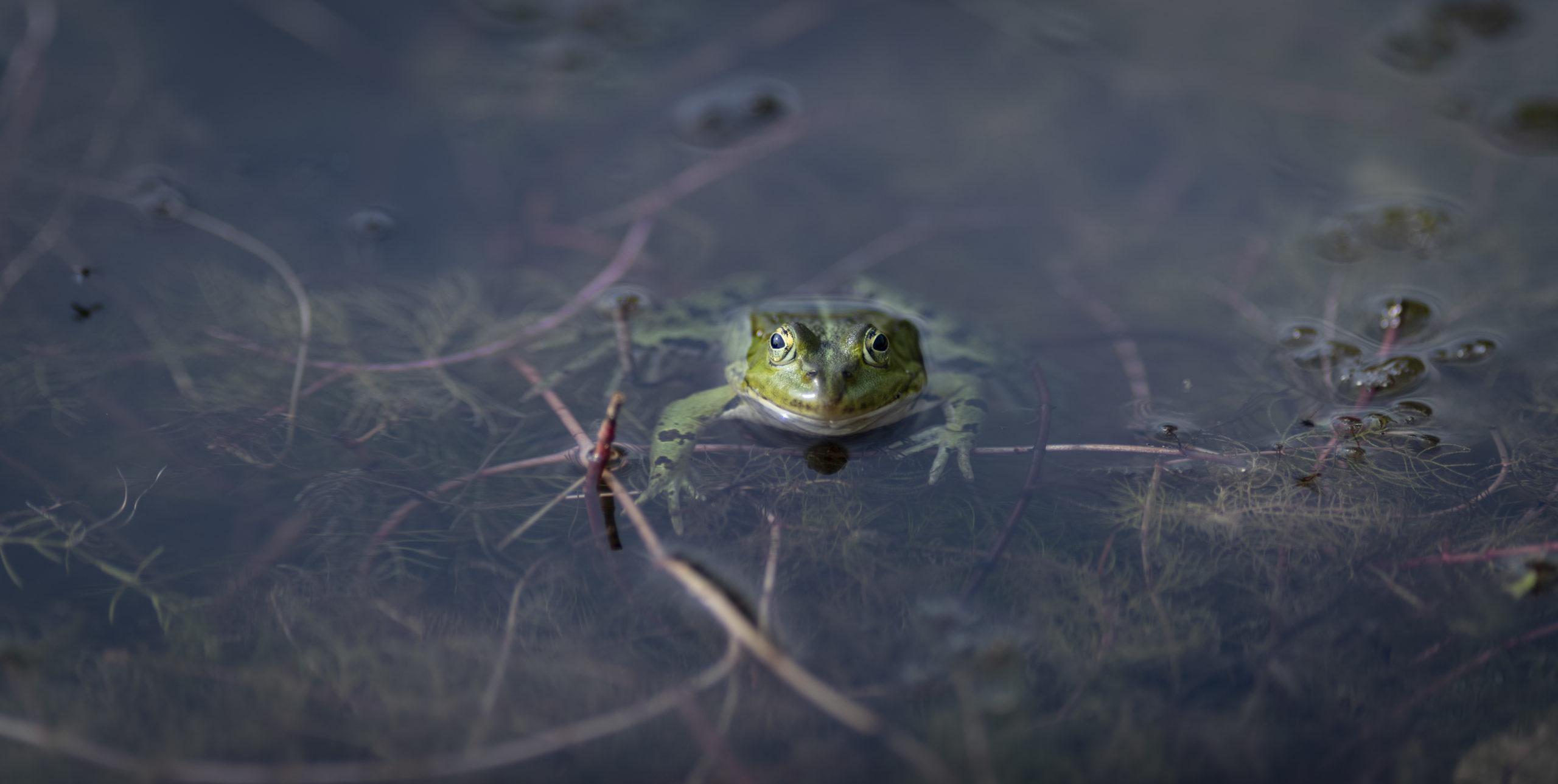 Flora und Fauna im Schwimmteich