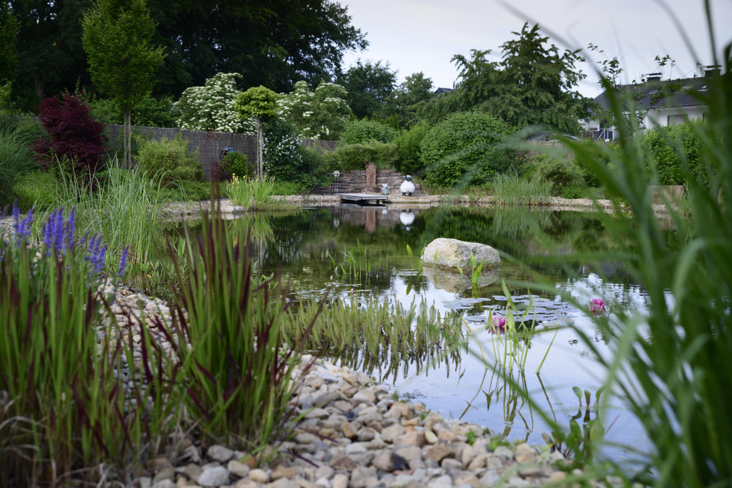 großer Privat-Schwimmteich mit natürlicher Gestaltung